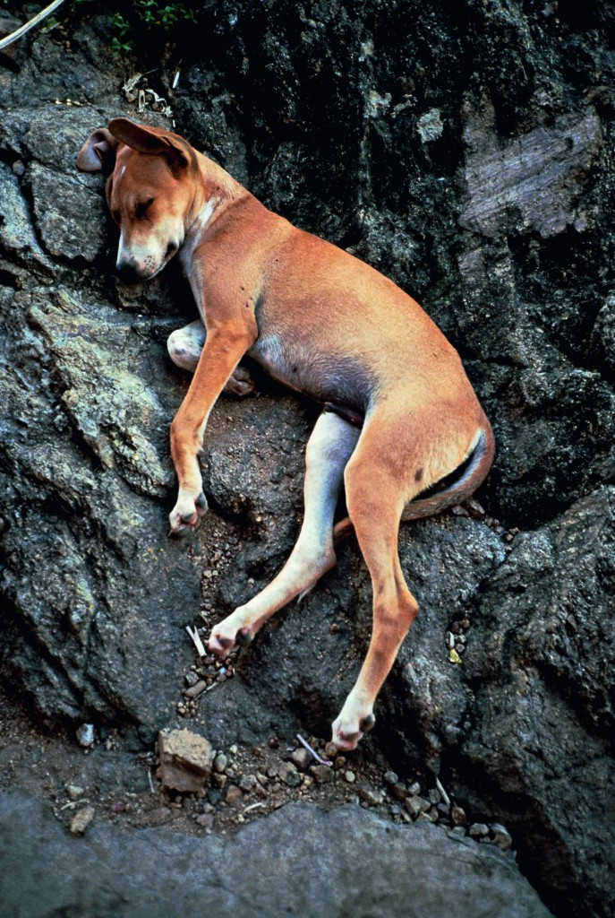 Sleeping Dog 1990